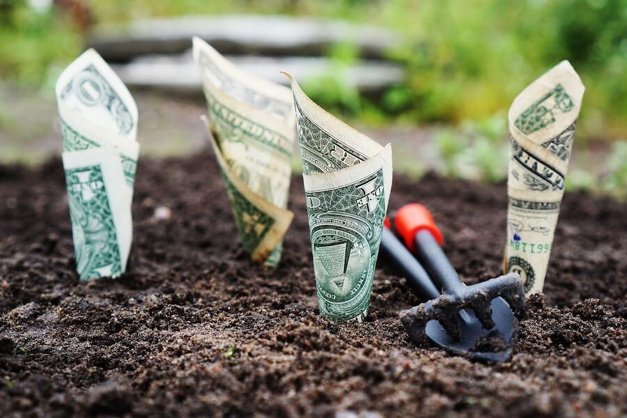 Dollars planten